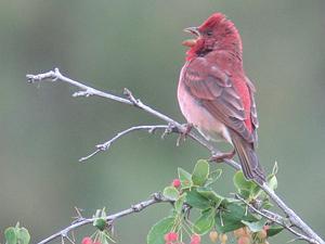 Ornithological Tourism